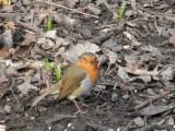 Singleton Park birds 2014