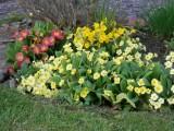 My garden - spring 2014