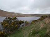 Upper Lliw reservoir with gorse