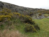 Outcrops with gorse