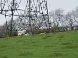 Not much shelter from a pylon!
