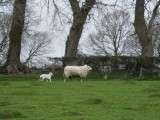 Slighly blurred due to a very near headlong fall over a molehill!