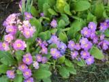 Garden - March/April 2014