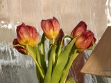 Those tulips have lasted well