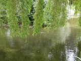 The lake in Hatherley Park