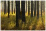 Nature & Rural life  2008