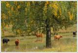 Nature & Rural life  2013
