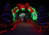 Night Lighting in the Hunter Valley Gardens in December