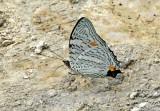 Butterfly-Cuyabeno4.jpg