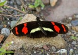 Butterfly San Isidro