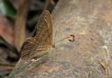 Butterfly-Rio-Bigal2.jpg