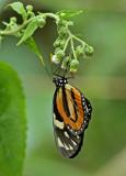 Butterfly-Rio-Bigal5.jpg