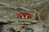 Crab Majagual