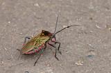 Insect Puerto Morona