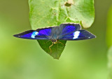 Butterfly Casupe