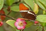 Butterfly Abra Patricia2.jpg