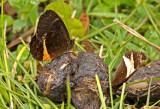 Butterfly San Lorenzo2.jpg
