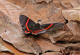 Butterfly Waqanki2.jpg
