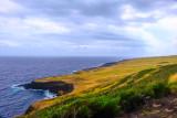 Pacific Meadows