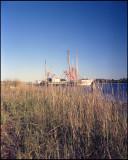 Brown Island Shrimper - Color