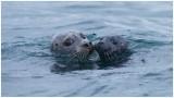 Scotland - Isle of Mull and Lunga Wildlife