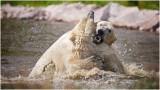 Polar Bears - Arctic Legends