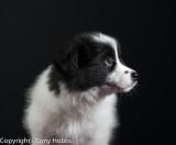 Lassie - profile