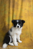 Lassie at 13 weeks of age