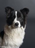 Lassie at 6 months...