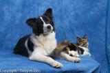 Lassie at 6 months