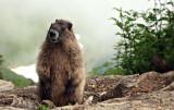 MarmotSauk.jpg