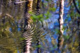 Reflection042614.jpg