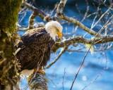 EaglePerchRckprt123014.jpg