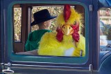 ChickenDrivingEdison0228715.jpg