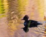 DuckWaterSprite.jpg