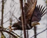EagleLaunch012416.jpg