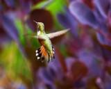 HummingbirdBakerLkLodge070116_3.jpg