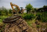 Western Whip Snake (Hierophis viridiflavus )