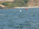 Whales-16.jpg