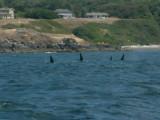 Whales-18.jpg