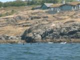 Whales-20.jpg