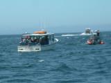 Whales-11.jpg