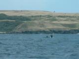 Whales-12.jpg