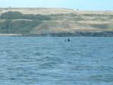 Whales-13.jpg