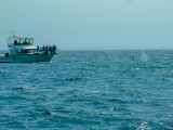 Whales-7.jpg