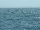 Whales-8.jpg