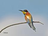 Birds of Hungary