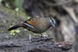 Baihualing, Yannan, China December 2016 Birding Trip