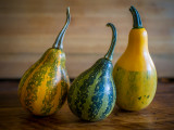Leaning Gourds