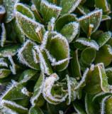 Frozen December 30 2015-1020869.jpg